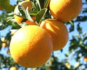 Naranjas vía web
