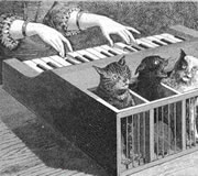 Piano de gatos